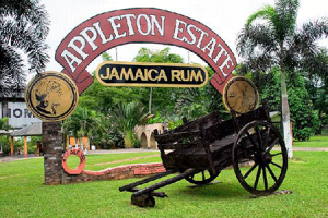 appleton-estate-rum-450x300